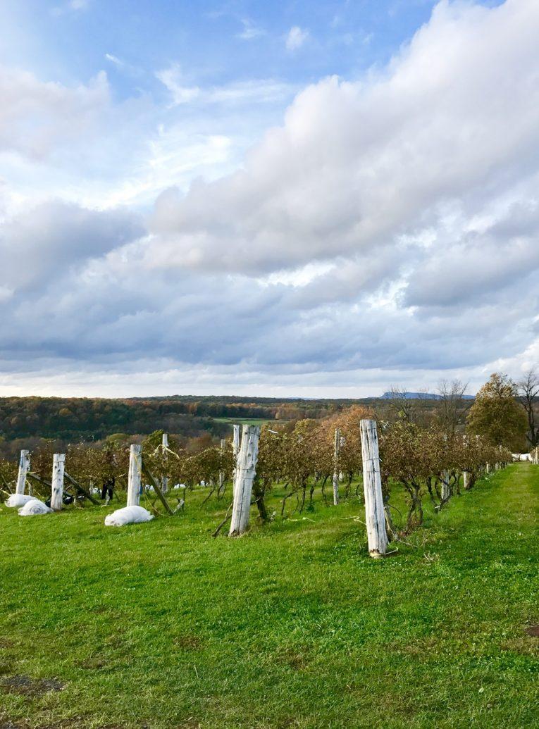 Gouveia vineyards.